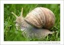 Photo escargot.jpeg